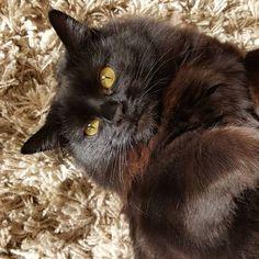 Miss Winnie  #kitty #suzspetservices
