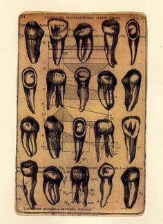 teeth.  http://www.ssdgsmiles.com