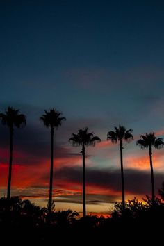 "visualechoess: ""Miami Sunset - by: Terry McMaster """