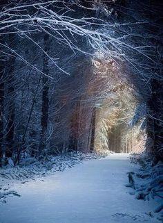 New Wonderful Photos: Enchanted Forest, Seattle, Washington Winter Szenen, Winter Magic, Winter Time, Winter Walk, Winter Road, Seattle Washington, Washington State, Snowy Forest, Snowy Woods
