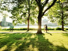 Nature Conservancy | How Urban Trees Can Save Lives