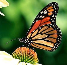 Why are native plants so important?