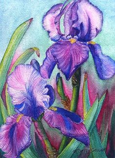 Betty Grissom: Purple Irises