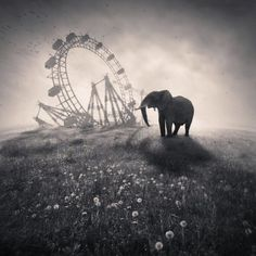 Elephant escaping