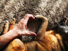 12 πράγματα που οι σκύλοι μπορούν να μας διδάξουν για την αγάπη!