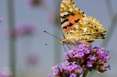 Motyl by PatrikFurik on 500px