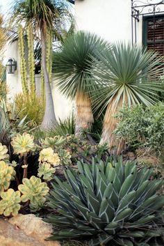 Stunning desert garden ideas for home yard 55 – Rockindeco - Gartengestaltung Succulent Landscaping, Front Yard Landscaping, Planting Succulents, Cacti And Succulents, Landscaping Ideas, Cactus Plants, Cactus Art, Succulent Planters, Succulent Arrangements
