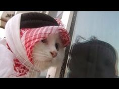 Top Funny Cats Compilation 2014 Funny Cats Compilation 2014 cats funny animals cats funny dog cats H https://www.youtube.com/watch?v=VicC8NYOf_c