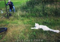 Photographer: Yes YES thats right move your body like a cat! #topcatphoto  #travellingcat #lastphotoshoot before #bikepack #northen #scandinavia
