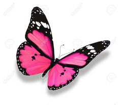 Image from http://previews.123rf.com/images/sunshinesmile/sunshinesmile1202/sunshinesmile120200008/12203692-Pink-butterfly-isolated-on-white-Stock-Photo-heart.jpg.