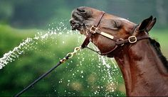 unlike my horse who is terrified of hoses...