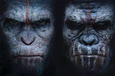 Caesar vs. Koba