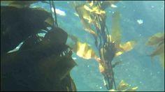 Scientists Confirm Fukushima Radiation in California Kelp