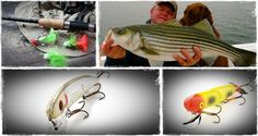 How to choose high quality wood for any fishing lure.