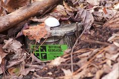 A great introduction to geocaching!  Would be so fun for Parker when he's older.