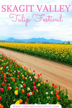 An easy day trip from Seattle, the Skagit Valley Tulip festival is a perfect way to spend a spring day! Explore field after field of fresh flowers while being surrounded by water, mountains, and all the best the Pacific Northwest has to offer.