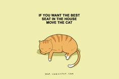 The Truth About Cats Through Some Very Entertaining Illustrations