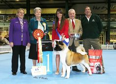 BUBA championship show 2015 #dogs #dogshows #dogshowing