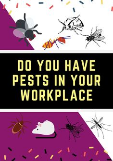 If you have a problem with pests in your workplace, no matter how big or small. The interior when it comes to the maintenance of a pest-free workplace. #pestcontrolservice #bugs #pestfree #insects #Werribee Pest Control Services, Brisbane, Workplace, Bugs, Insects, Things To Come, Interior, Free, Indoor