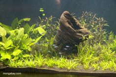 Neat planted tank. Looks nice for small, schooling fish.