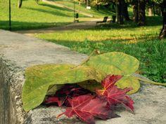 Autunno - Giardini Via Rogoredo Milano | Flickr - Photo Sharing!