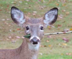 1000 Images About Deer Hunting On Pinterest Whitetail