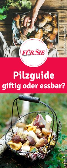 Mit unserem Pilz Guide kannst du einfach Pilze bestimmen und greifst nicht zu den Giftigen. Living And Nonliving, Nature Scavenger Hunts, Hiking With Kids, Outdoor Activities For Kids, Nature Table, Walking In Nature, Superfoods, Stuffed Mushrooms, Beef