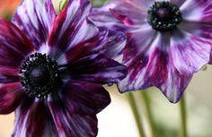 Flower Blogs – Websites About Floral Design - ELLE DECOR