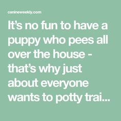 How To Potty Train A Boxer Puppy. In basic, big pet dog breeds such as the Boxer are easier to potty train than smaller canines. How to potty train a . Puppy Toilet Training, Training Your Puppy, Potty Training, Large Breed Puppy Food, Wood Dog House, Puppy Pens, Ticks On Dogs, Puppy Litter, Puppy House