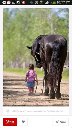 Fries friesian horse A horses ass All The Pretty Horses, Beautiful Horses, Animals Beautiful, Beautiful Children, Beautiful Images, Horse Pictures, Animal Pictures, Animals And Pets, Cute Animals
