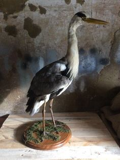 Barry leggy heron taxidermy stuffed bird by DropDeadGorgeousUK