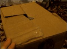 A Cat Tries To Pop Out Of A Box And Gets His Head Stuck