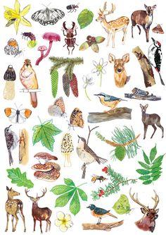 Hennie Haworth Drawing Style graphics