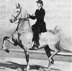American Saddlebred mare Duke's Wild Honey passed on her coloring to several of her offspring.