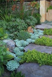 Small Front Yard Landscaping, Succulent Landscaping, Front Yard Design, Planting Succulents, Backyard Landscaping, Succulent Plants, Propagate Succulents, Succulent Rock Garden, Landscaping Design