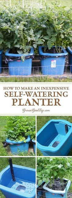 Many versions of self watering containers, also known as self watering grow boxes, self watering pots, and self watering planters are sold online, but you can make them yourself for a fraction of the cost out of some easy to find items. - My Garden Muse Hydroponic Gardening, Hydroponics, Organic Gardening, Gardening Tips, Vegetable Gardening, Urban Gardening, Gardening Supplies, Indoor Gardening, Aquaponics Diy