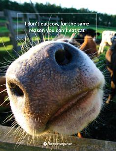 I don't eat cow for the same reason you don't eat cat #vegan