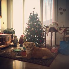 Dog and christmas tree (it's beautiful day)