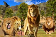 killer of cecil the lion | Cecil the Lion Killer Mission of Goodwill - Behind Blondie Park
