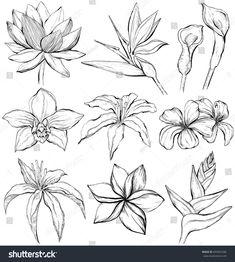 Flower Tattoo Foot, Small Flower Tattoos, Tattoo Flowers, Tattoo Bird, Tattoo Floral, Tropical Flower Tattoos, Tropical Flowers, Orchid Flowers, Hibiscus Tattoo