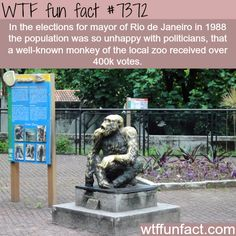 Monkey received more than 400,000 votes for election to be mayor - WTF fun facts