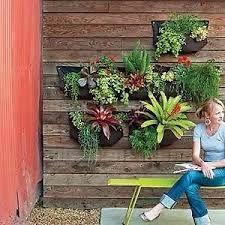 australian vertical gardens for courtyards - Google Search