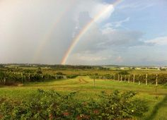 Lakeridge Winery & Vineyards in Clermont, FL near Orlando.