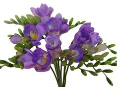 Image from http://sierraflowerfinder.blob.core.windows.net/medias/FlowerPictures/5538/FOTO1%20copy.jpg.