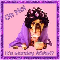 Monday News, Views And Other Things Good Morning Monday Gif, Monday Morning Humor, Monday Humor, Good Morning Coffee, Good Morning Sunshine, Monday Quotes, Its Friday Quotes, Good Morning Good Night, Day For Night