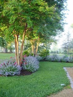 landscaping with crepe myrtle trees with a beautiful flower border