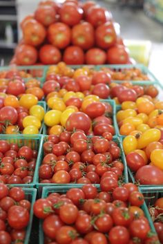 Beautiful organic tomatoes picked fresh from the gardens of nature. These tomatoes are ready to be diced and sliced to make a perfect side dish or meal. We got you covered, from salsa to pasta sauce, with the freshest tomatoes in November 2014!