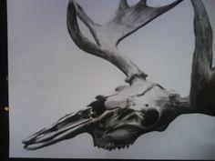 moose skull by ~rusty-skye on deviantART