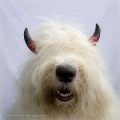my Halloween costume.. don't I look scary :)