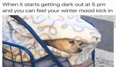Just 22 Doggo Memes That Will Get You Through The Day
